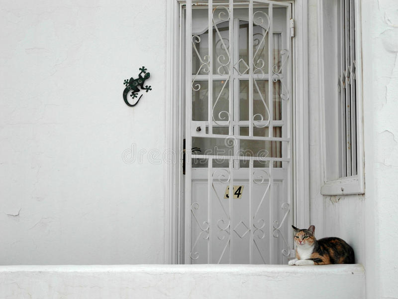 Download Cat waiting stock photo. Image of sweet, adorable, pretty - 31088540