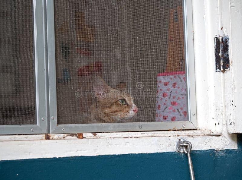 Cat Waiting på fönstret och missesna Owner arkivbilder