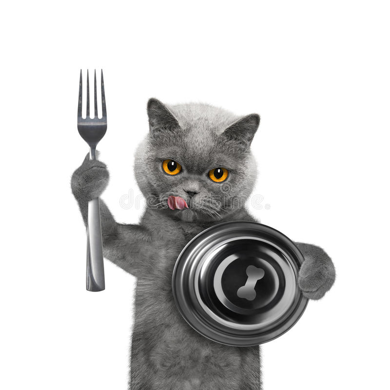 Cat waiting for some food. Isolated on white stock photo