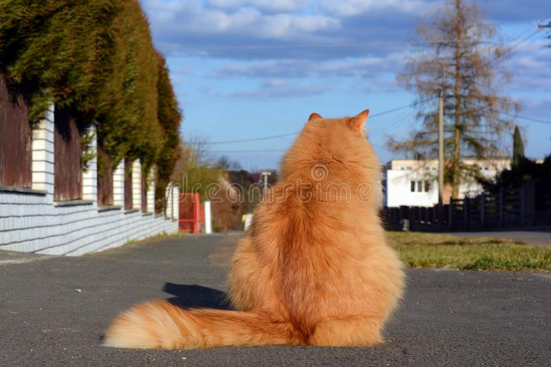 Cat waiting on the street royalty free stock photography
