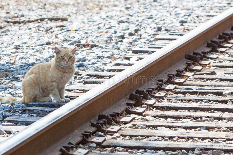 Cat Waiting for The Train stock images