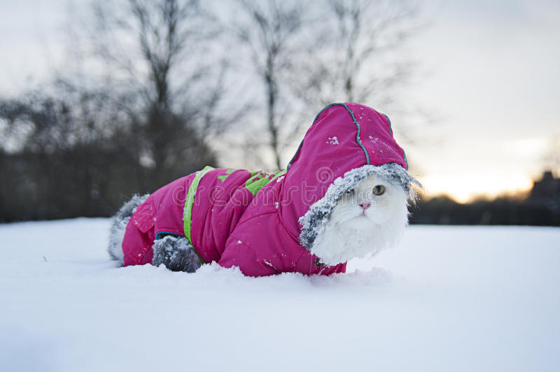 Download Cat for a walk stock photo. Image of tree, frost, scarf - 28238710
