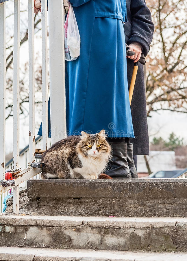 Cat on a walk on a winter day stock image