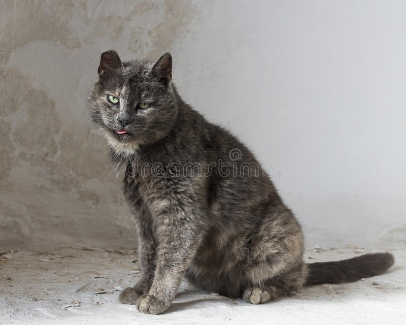 The cat that walked by himself stock photo