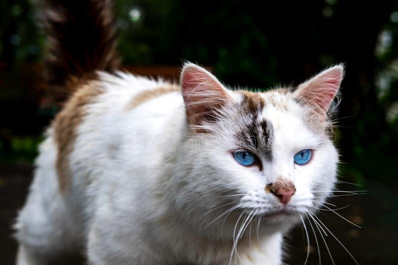 Cat walking alone outside close up stock images