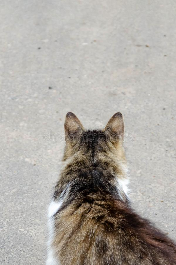 Cat walking at the ground. Copy space royalty free stock image