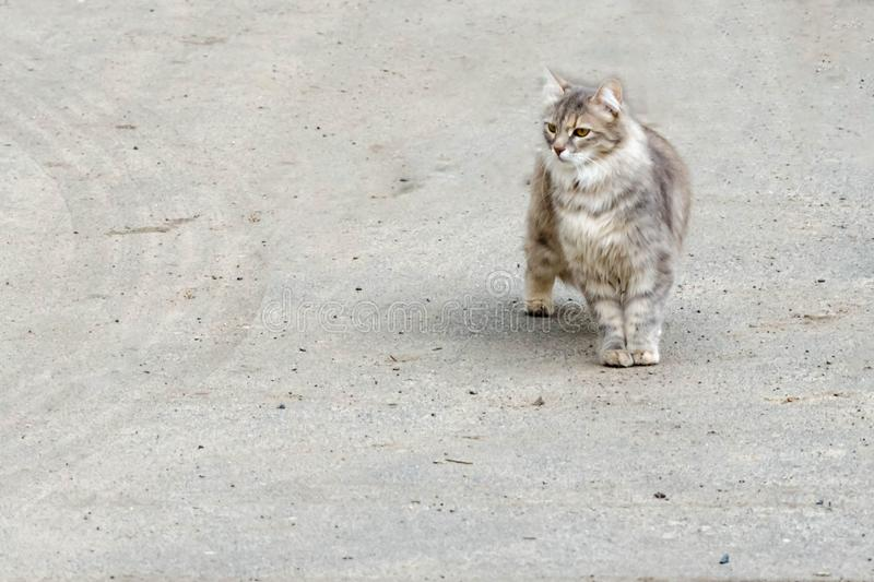 Cat walking at the ground. Copy space stock image