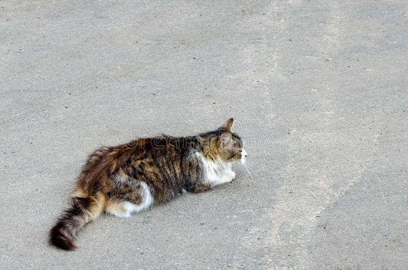 Cat walking at the ground. Copy space stock photo