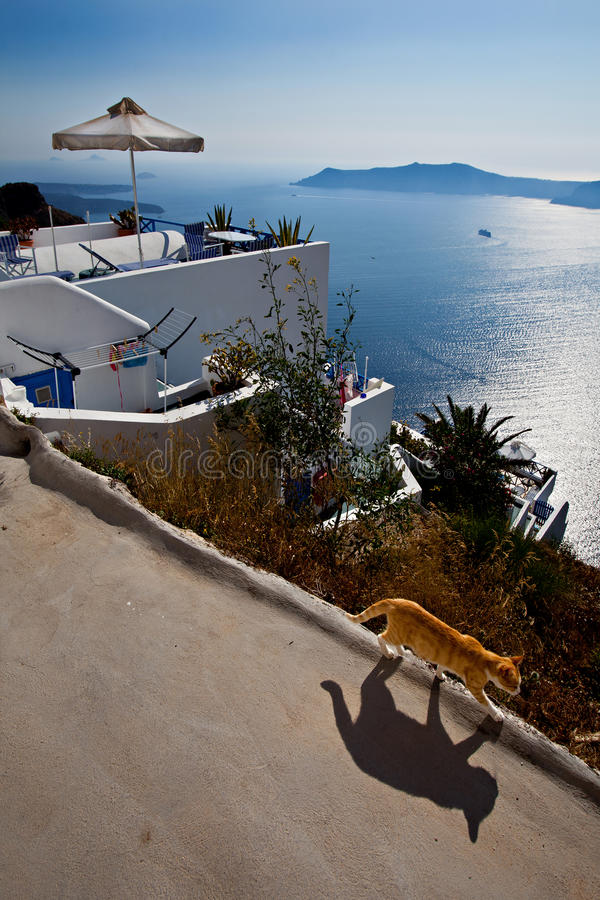 Cat walking in the sun with a Santorini seascape stock images