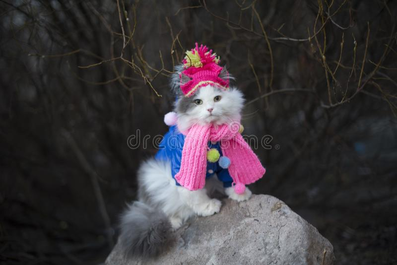 Cat in warm clothes waiting for spring stock image