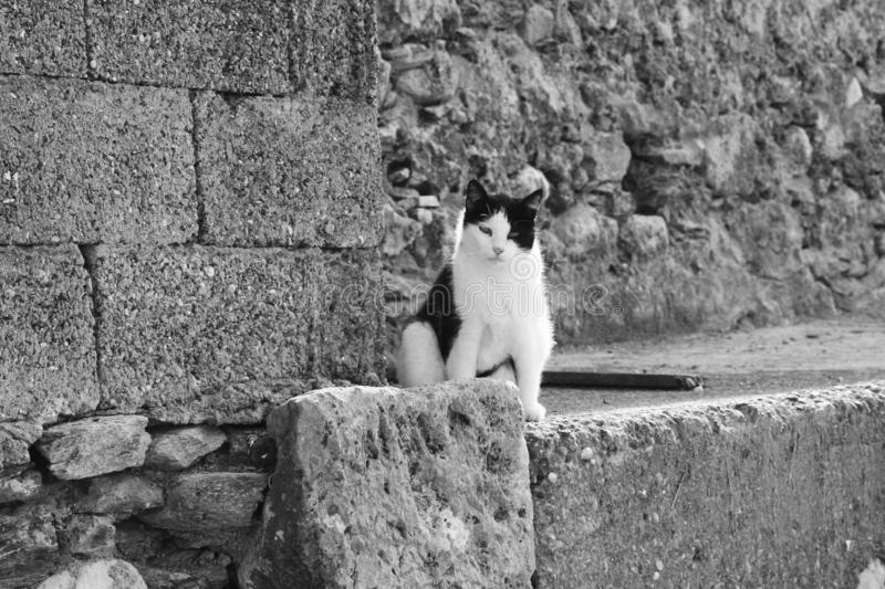 The cat is waiting. This cat was sitting in front of a church and looking at the people passing by royalty free stock image
