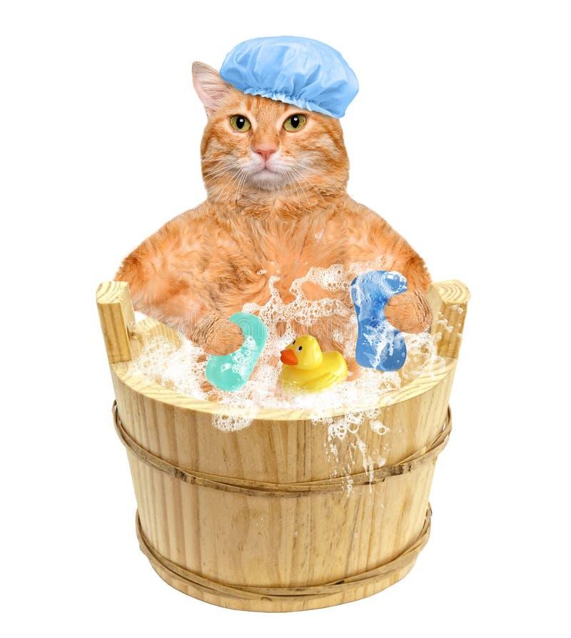 Cat washes. Cat washes . Isolated on white stock photography