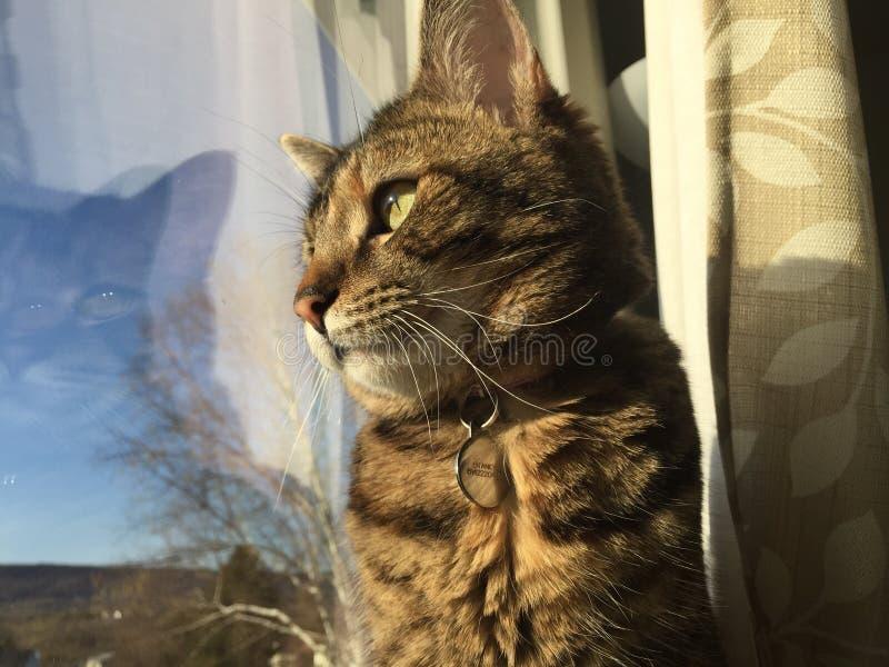 Cat Watch photos libres de droits