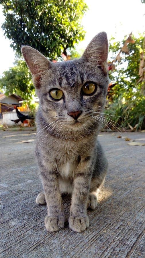 Cat Watch arkivbild