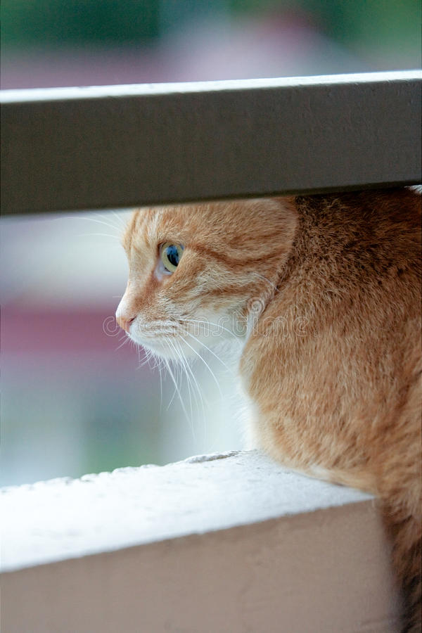 Cat watching from balcony