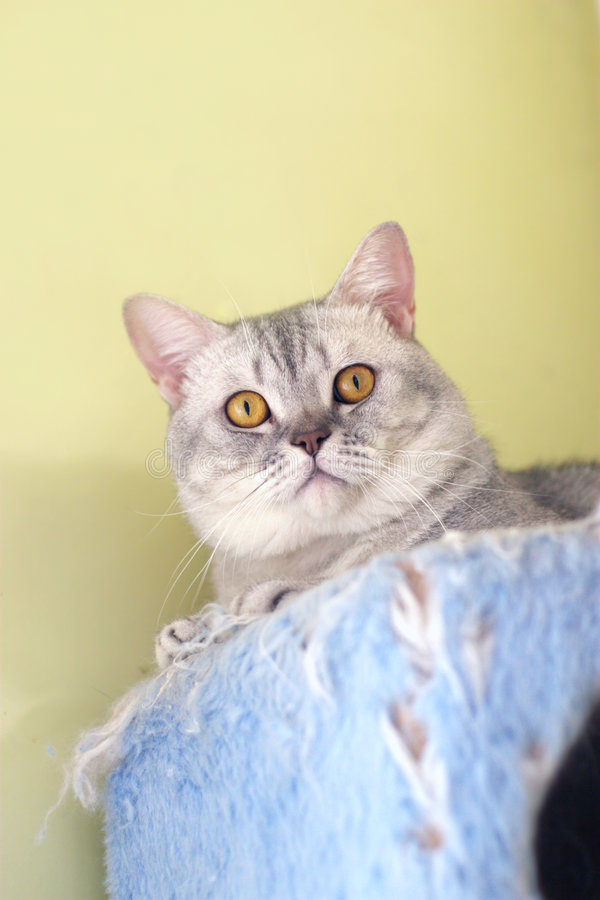 Download Cat watching from its cote stock photo. Image of catling - 6184162