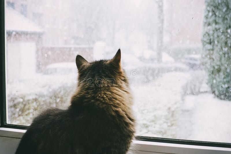 Cat watching snow stock photo