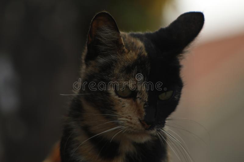 Cat watching you stock photography
