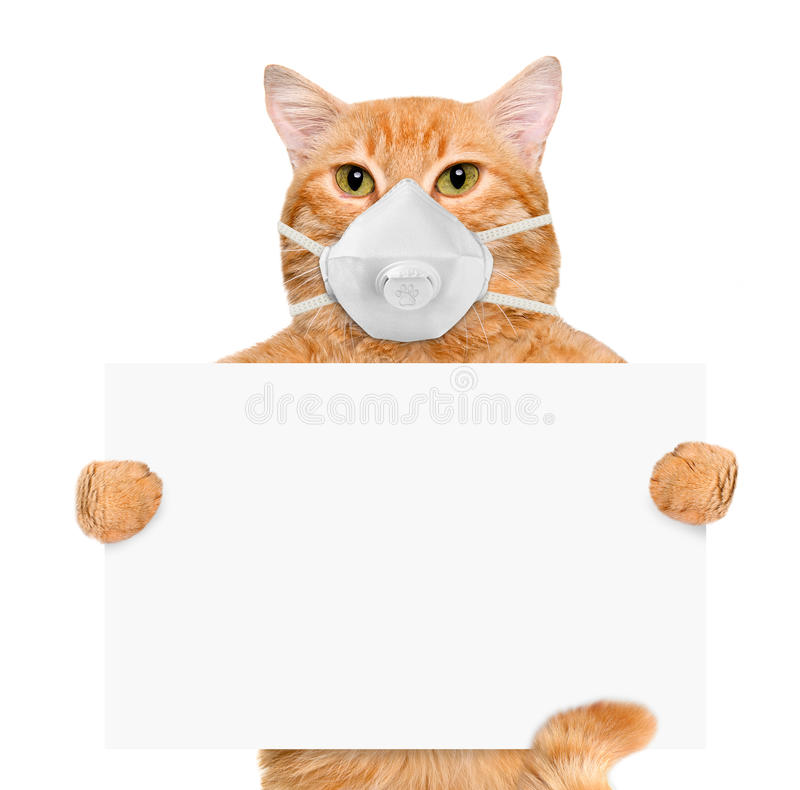Free Cat Wearing A Face Protective Mask . Stock Photography - 56211092