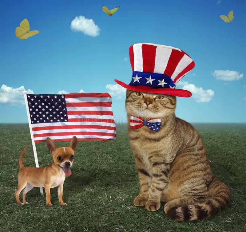 Cat patriot 3 royalty free stock photos