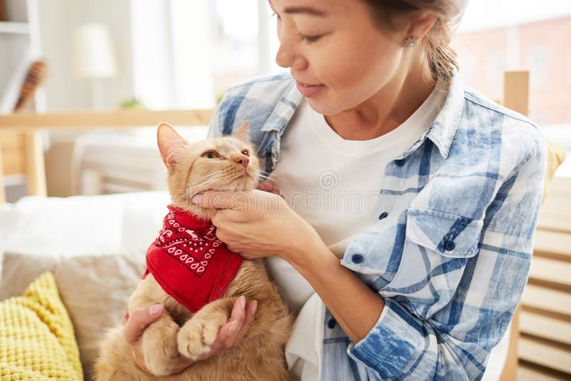 Cat Wearing Bandana arkivbilder