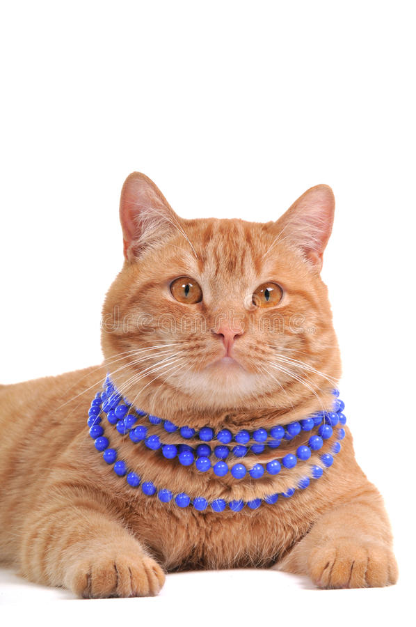 Cat Wearing Beads Royalty Free Stock Photo
