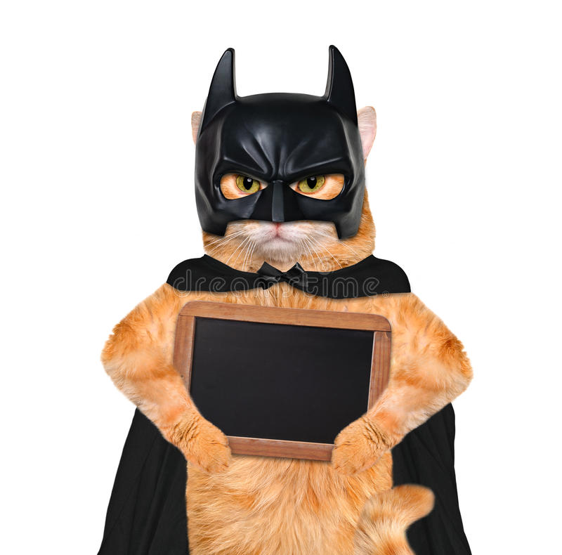 Cat wearing costume for halloween with wooden blank board. stock photography