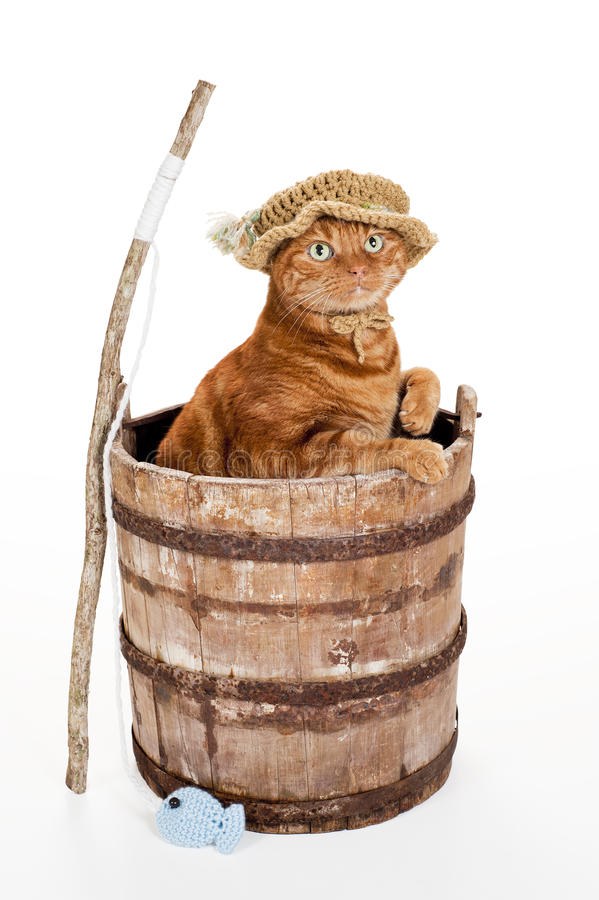 Cat wearing fisherman hat. Orange cat wearing a fisherman's hat. Sitting in a weathered wooden bucket with a stick fishing pole and crocheted fish. Shot in the royalty free stock image
