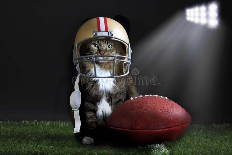 Cat wearing football helmet on playing field stock photography
