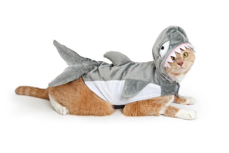 Cat Wearing Funny Shark Halloween-Kostüm lizenzfreie stockfotos