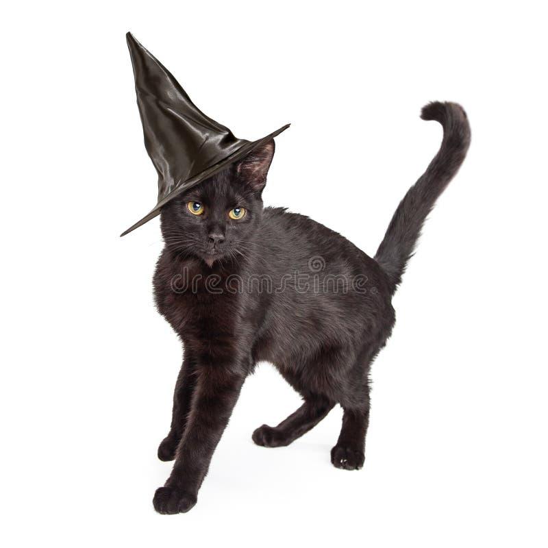 Cat Wearing Halloween Witch Hat negra imágenes de archivo libres de regalías
