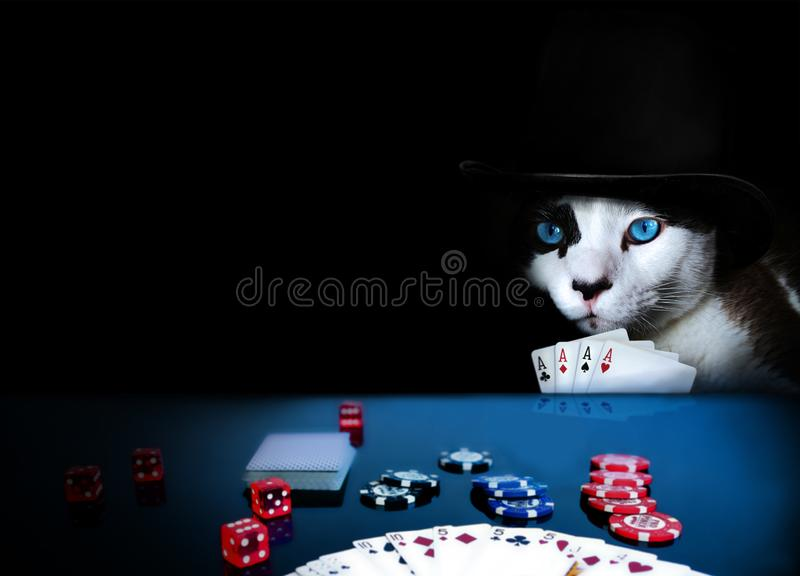 Cat wearing a hat playing poker with four aces in hand royalty free stock image