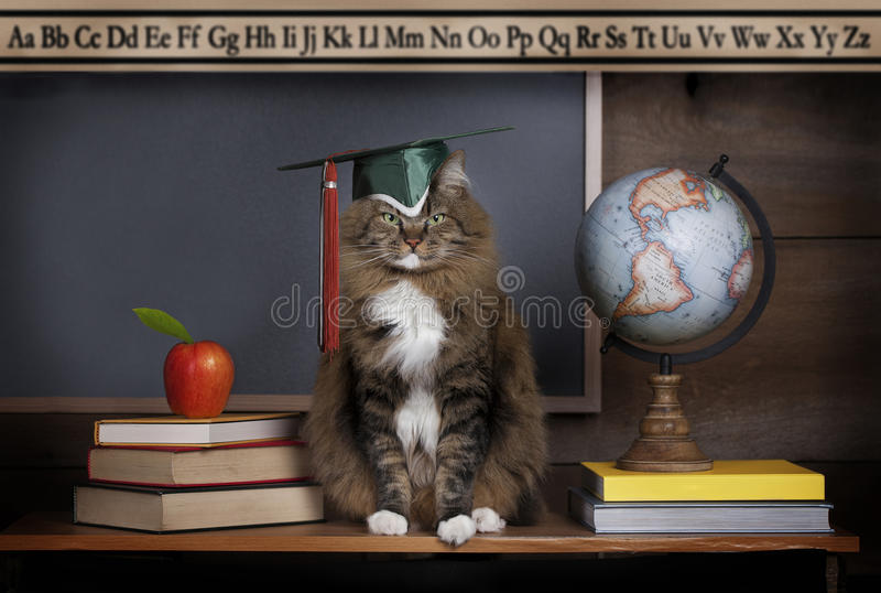 Cat Wearing Mortarboard. A cat sitting on school desk wearing mortarboard, books and world globe on desk with blackboard and alphabet banner blurred in stock images