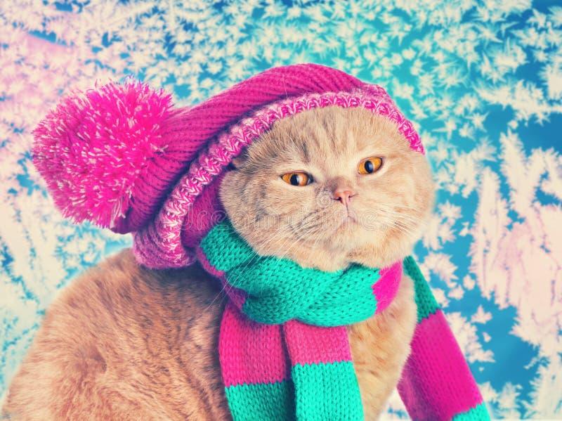 Cat wearing a pink knitting hat stock photo