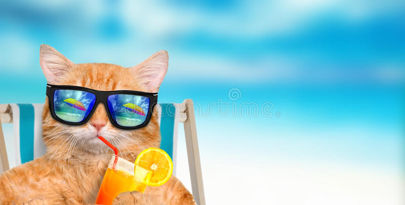 Cat wearing sunglasses relaxing sitting on deckchair. Cat wearing sunglasses relaxing sitting on deckchair in the sea background royalty free stock image