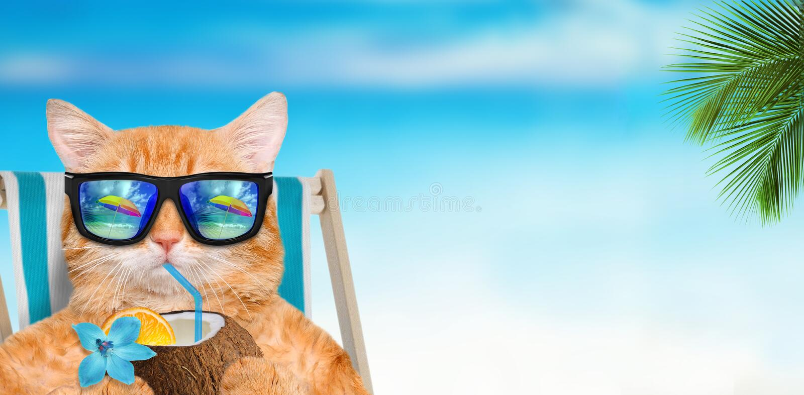 Cat wearing sunglasses relaxing sitting on deckchair. Cat wearing sunglasses relaxing sitting on deckchair in the sea background royalty free stock images