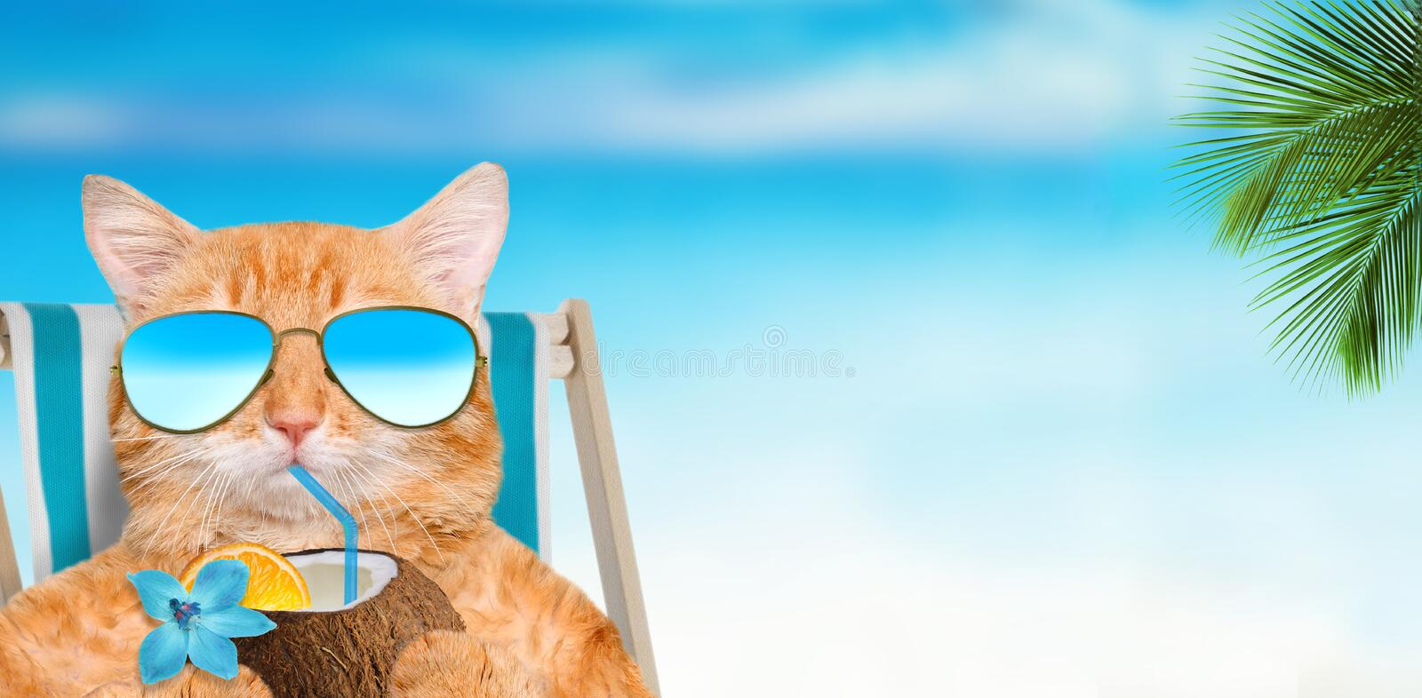 Cat wearing sunglasses relaxing sitting on deckchair . Cat wearing sunglasses relaxing sitting on deckchair in the sea background royalty free stock image