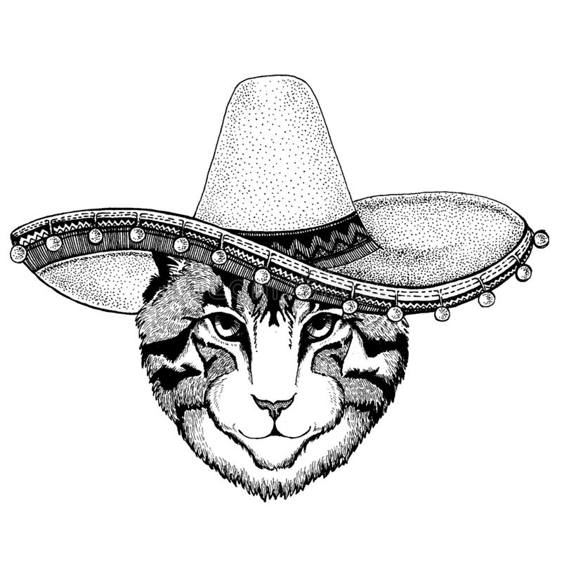 Cat wearing traditional mexican hat. Classic headdress, fiesta, party. Cat wearing traditional mexican hat. Classic headdress, fiesta, party stock illustration