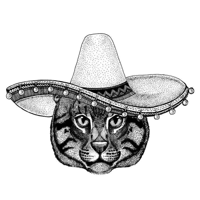 Cat wearing traditional mexican hat. Classic headdress, fiesta, party. Cat wearing traditional mexican hat. Classic headdress, fiesta, party royalty free illustration