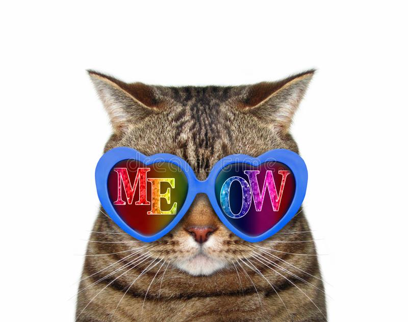 Cat wears meow sunglasses 3. The funny cat wears blue sunglasses with inscription meow. White background. Isolated royalty free stock images
