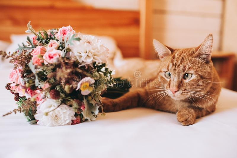 Cat and wedding bouquet royalty free stock photo