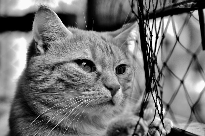 Cat, Whiskers, Black And White, Black royalty free stock photos