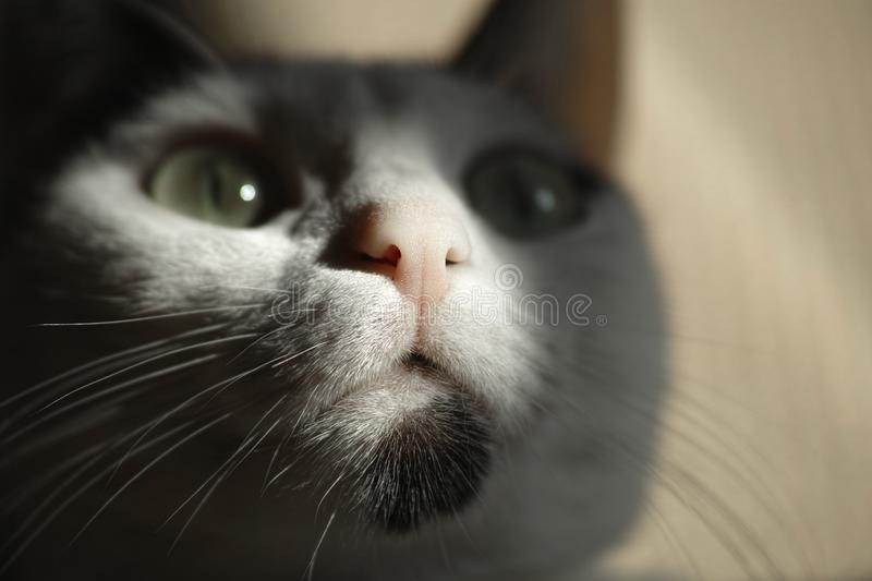 Cat, Whiskers, Face, Black royalty free stock photography