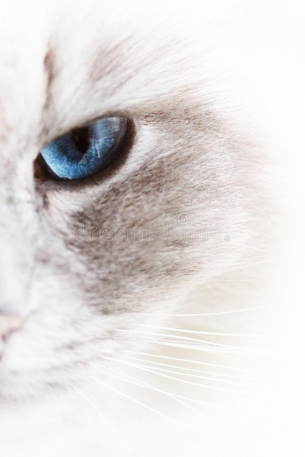 Cat, Whiskers, Face, Eye stock photo