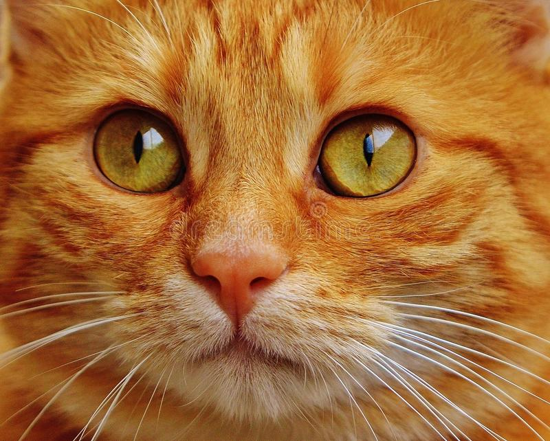Cat, Whiskers, Face, Eye stock image