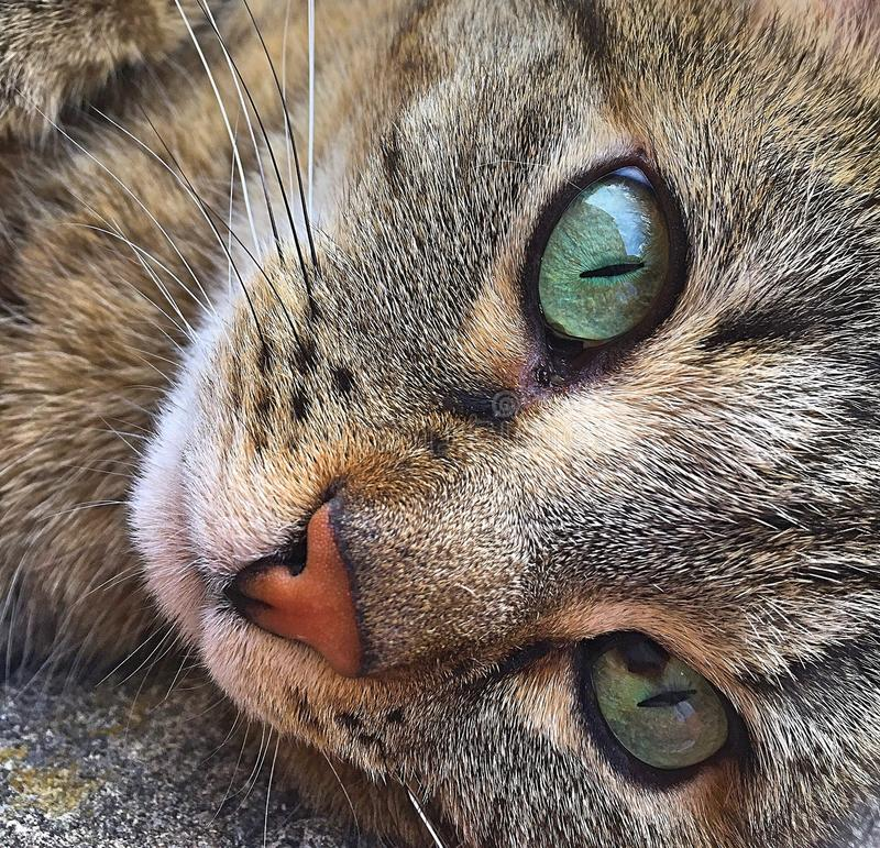 Cat, Whiskers, Face, Fauna Free Public Domain Cc0 Image