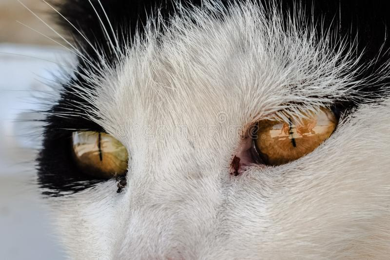 Cat, Whiskers, Face, Nose royalty free stock photo