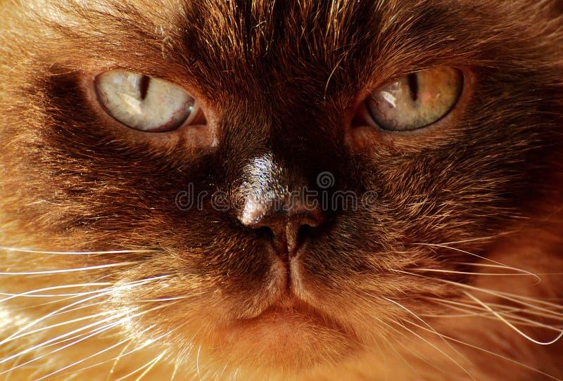 Cat, Whiskers, Face, Nose Free Public Domain Cc0 Image