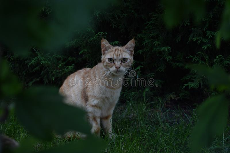 Cat, Whiskers, Fauna, Green stock photo