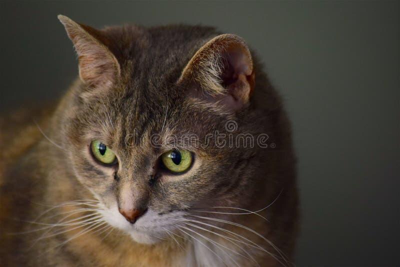Cat, Whiskers, Fauna, Mammal Free Public Domain Cc0 Image
